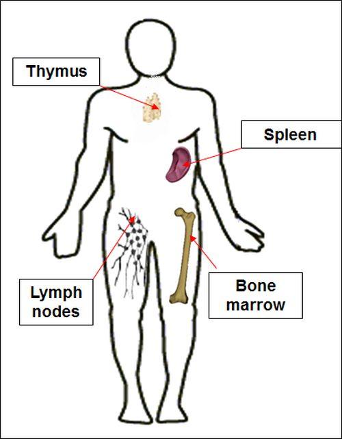 Spondylitis thesis